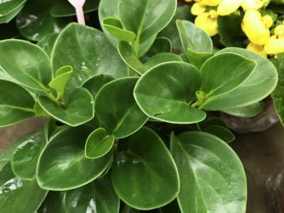 豆瓣绿摄影图