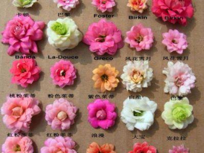 长寿花摄影图