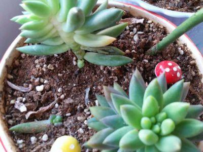 红稚莲摄影图