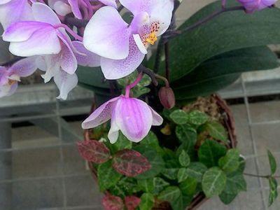蝴蝶兰摄影图