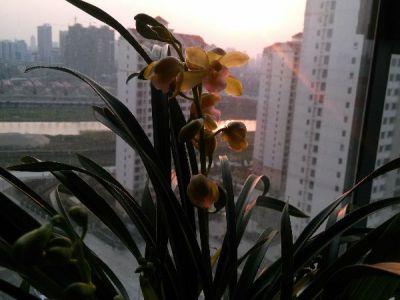 兰花摄影图