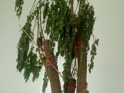 发财树摄影图