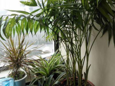袖珍椰子摄影图