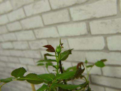 龙沙宝石摄影图