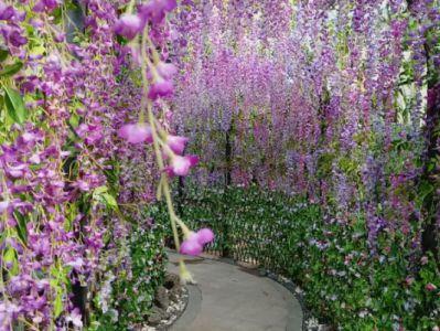 紫藤摄影图